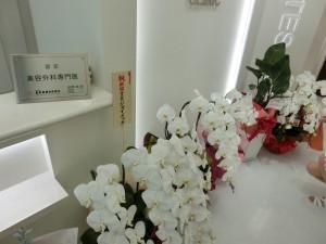 開院祝のお花2