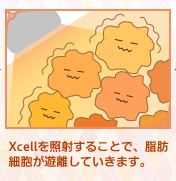 Xcellを照射することで、脂肪細胞が遊離していきます。